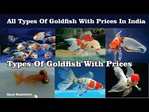 Types Of Goldfish With Prices In India #Goldfishtypeswithnames