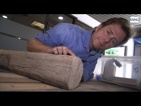 C mo detectar una plaga de termitas o carcoma youtube for Carcoma o termitas