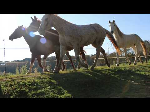 INCREDIBLE Equestrian tourism in SPAIN