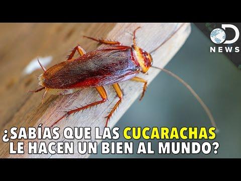 11 datos interesantes sobre el drama criminal Los intocables