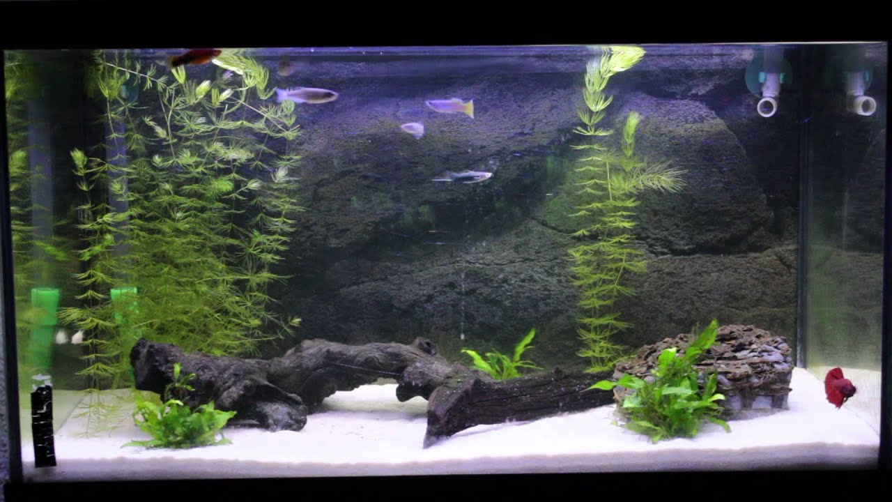 Mi acuario de 60 litros iluminaci n led azul y blanca - Decoraciones de peceras ...