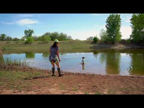 Introducing Your Puppy To Water - Gun Dog Training