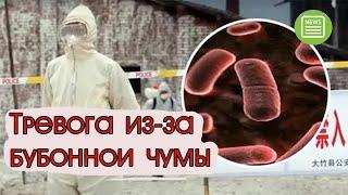 Нововсти сегодня - Возле границ России объявили тревогу из-за бубонной чумы