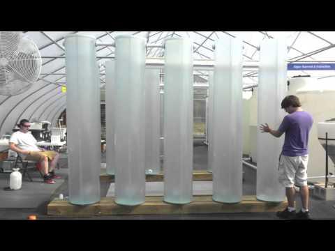 Agcore Spirulina is Emerging