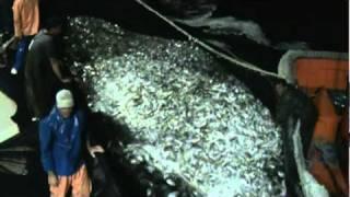 pesca da sardinha barco de pesca xóxó e Adalberto VTS_20_1.VOB