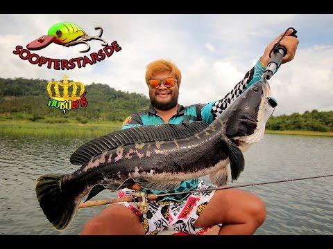 กบซุปตาร์ # ตกปลาชะโดยักษ์ แม่ครอกเขื่อน BY Yod911