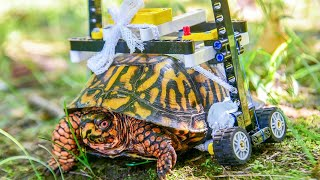 Injured Turtle at Maryland Zoo Gets Custom Wheelchair Made of Legos