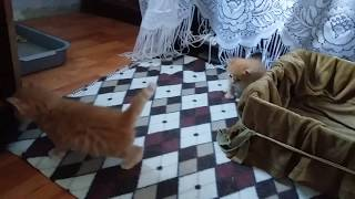 Котята придумали как выбраться. Kittens have come up with as get out.