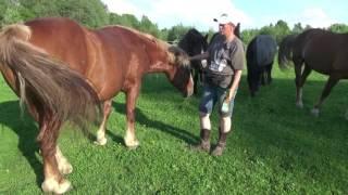 Репелленты для лошади - дёшево и эффективно
