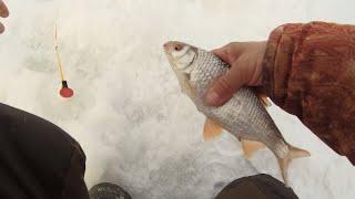 В мороз клюют только монстры Зимняя рыбалка на плотву в феврале 2021