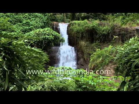 Attukal waterfall in Munnar - Kerala