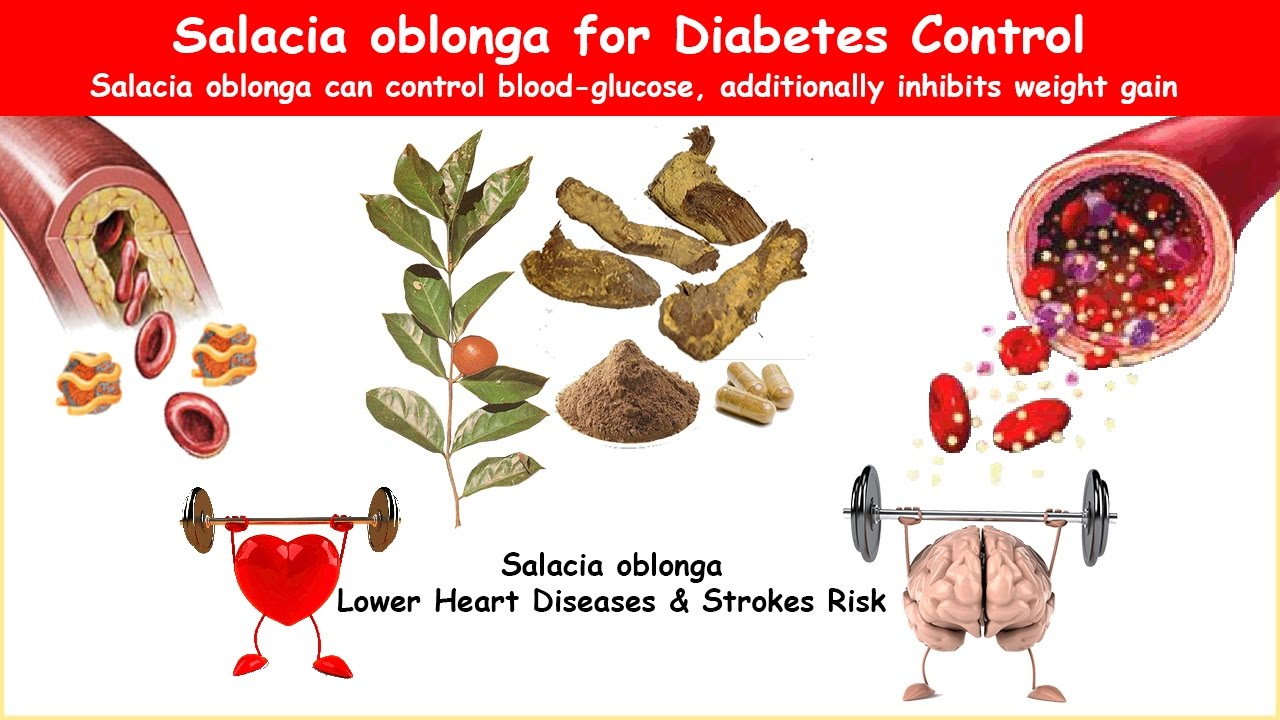 Salacia Oblonga Diabetes Herb Lower Bs Cholesterol Youtube