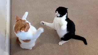Cats Playing & Fighting | 4K