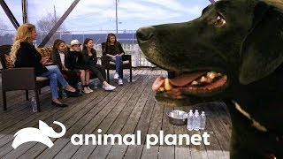 ¡Familia de 8 personas busca perro ideal! | Pit bulls y convictos | Animal Planet