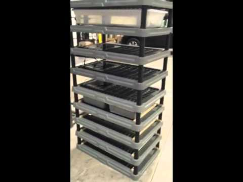 Build My Rack >> Homemade snake rack for ball pythons - YouTube