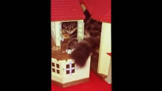 Смотреть Кошка играет в домике, моя семья онлайн