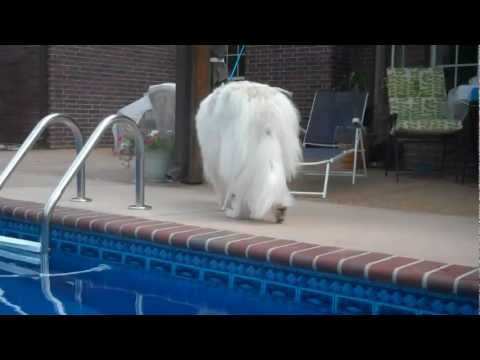 Pyrs check out pool -1