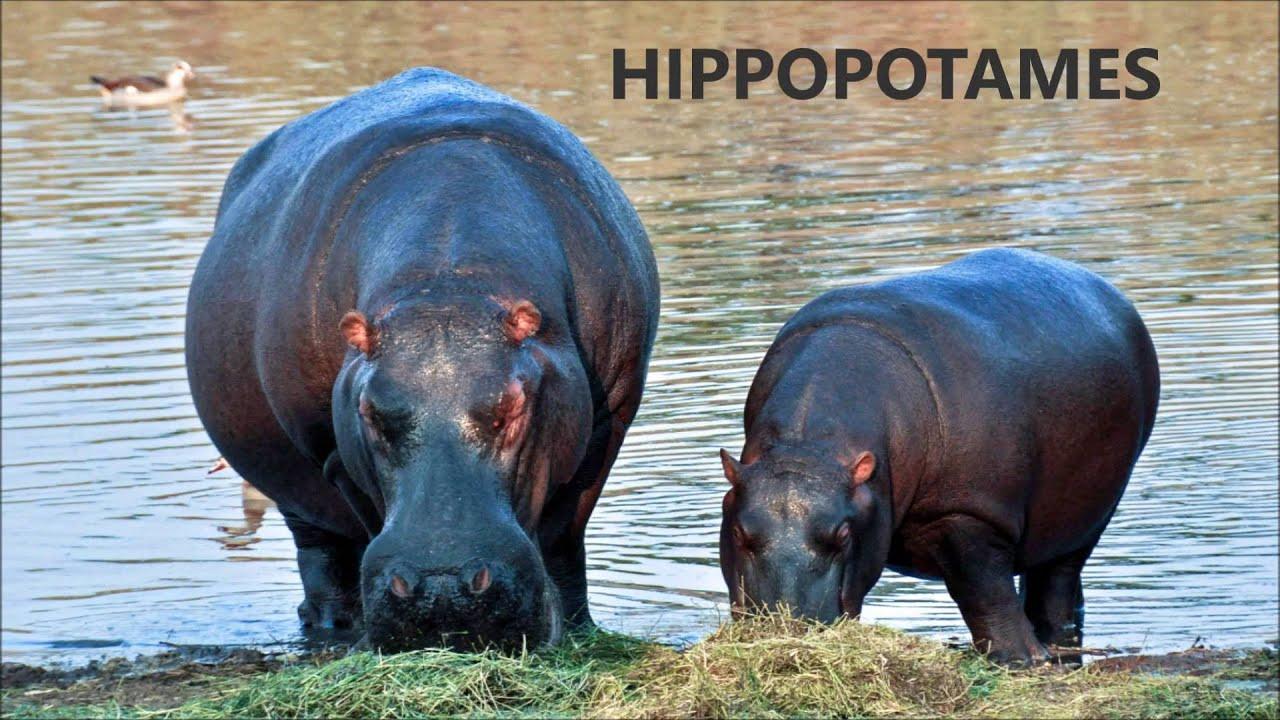 Apprendre les animaux de la savane africaine aux enfants - Animaux savane africaine ...