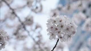 Joshua Bell - Vivaldi