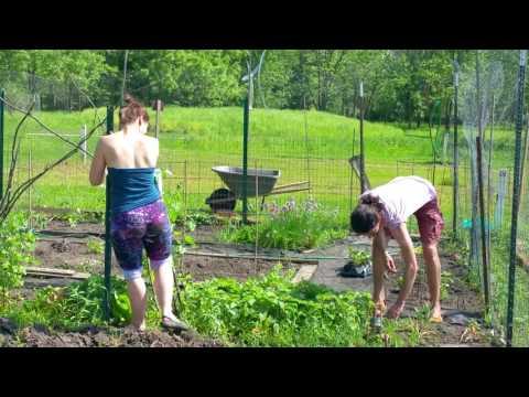 Organic Gardeners. Meadow Brook Park. Miniature Farm Or Garden. Urbana, Illinois. May 23, 2016