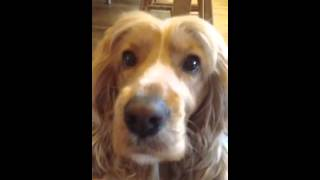 How To Teach Your Dog To Speak