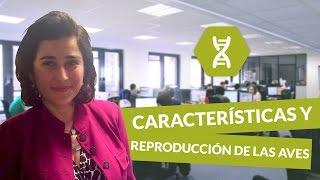 Características y reproducción de las aves - Biología - digiSchool