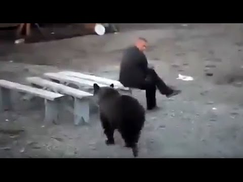 Russian man doesn't give a damn about bear roaming nearby