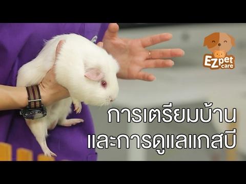 EZ pet care [by Mahidol] การเตรียมบ้านและการดูแลแกสบี