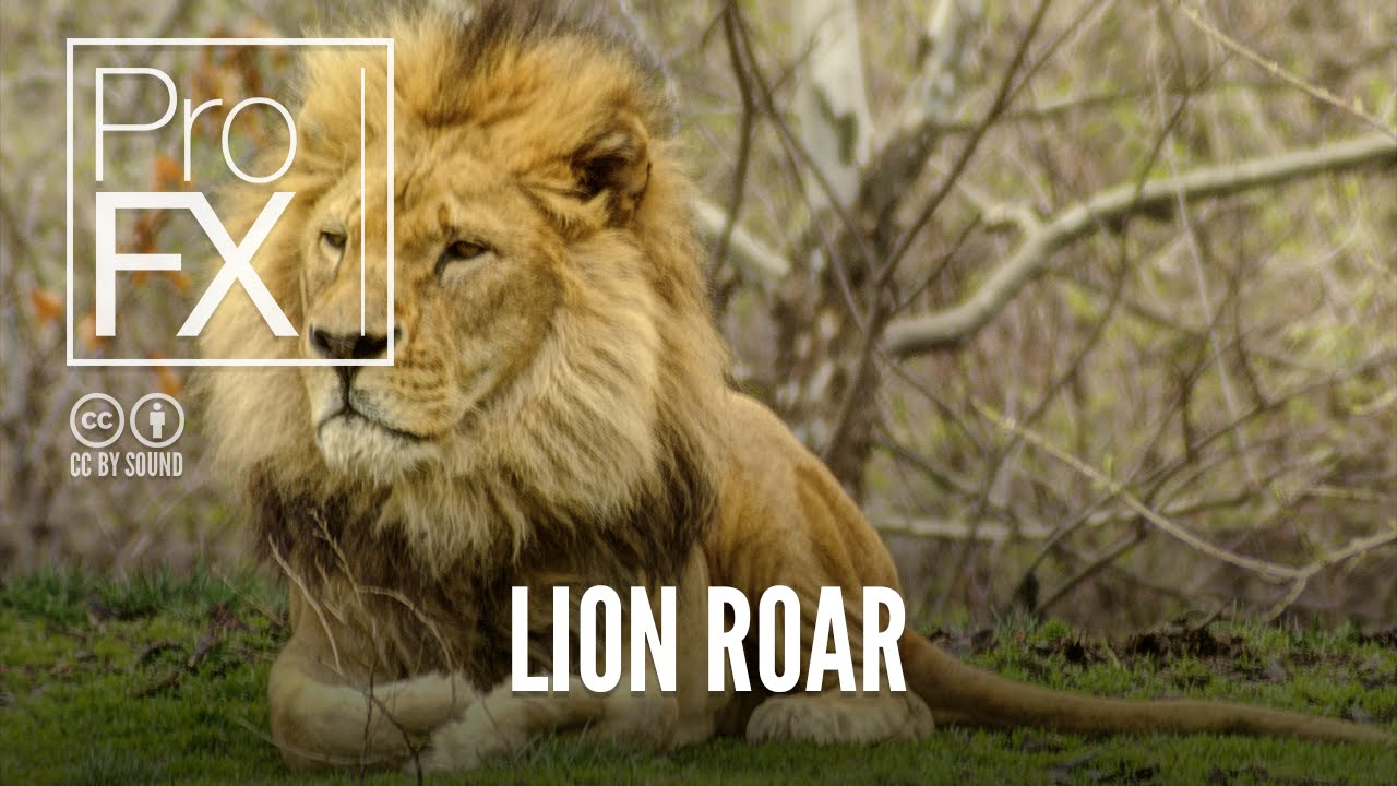 Lion roar sound effect | ProFX (Sound, Sound Effects, Free ... - photo#22