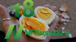 №18 Польза яиц и размер холестерина. Доктор Майкл Грегер. Русская озвучка