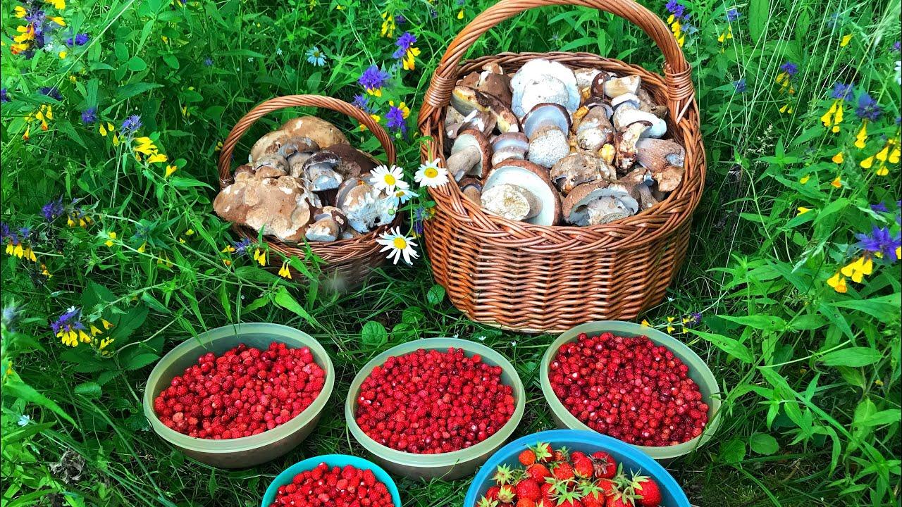 СЛАБОНЕРВНЫМ НЕ СМОТРЕТЬ!!! БЕЛЫЕ ГРИБЫ 2020 ПОЛНЫЕ КОРЗИНЫ! 150 белых грибов за 10 минут