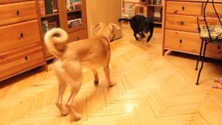 Прага - маленькая черная собака в дар, добрые руки