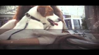 с собакой за границу...анонс эфира 30.04.2016
