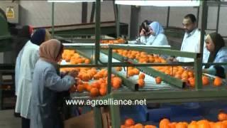 фрукты оптом.flv(, 2011-10-26T19:11:49.000Z)