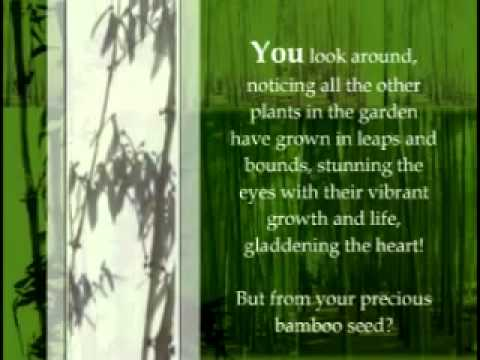 The Chinese Bamboo Story Www Getoutthebox Org Youtube