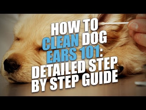 How to Clean a Dog's Ears Naturally (Avoid or Treat Ear Infections)