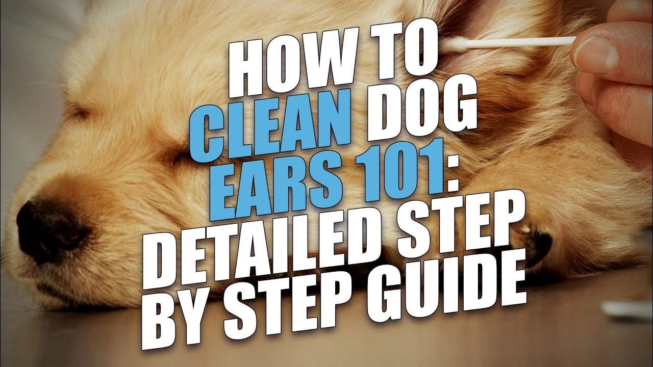 How To Clean A Dog S Ears Naturally Avoid Or Treat Ear Infections