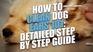 How To Clean Dog Ears 101: Detailed Step by Step Guide