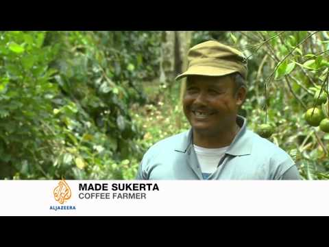 Trouble brews for Indonesian coffee farmers
