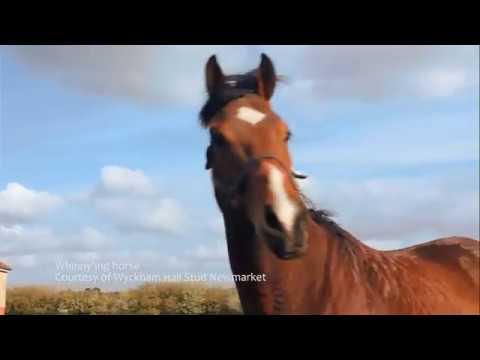 Mmmm caballo relincho en el campo