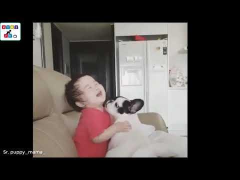 Собаки и дети-друзья на белом свете!