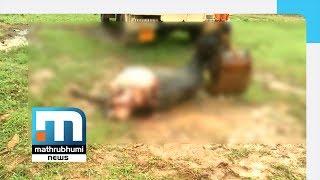 Buffalo Killed, Leg Cut Off, Smuggled | Mathrubhumi News