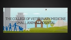 The College of Veterinary Medicine Small Animal Hospital