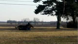 Protection Dog Training- This Is The Real Deal-watch Valentine Do Work-macs K9