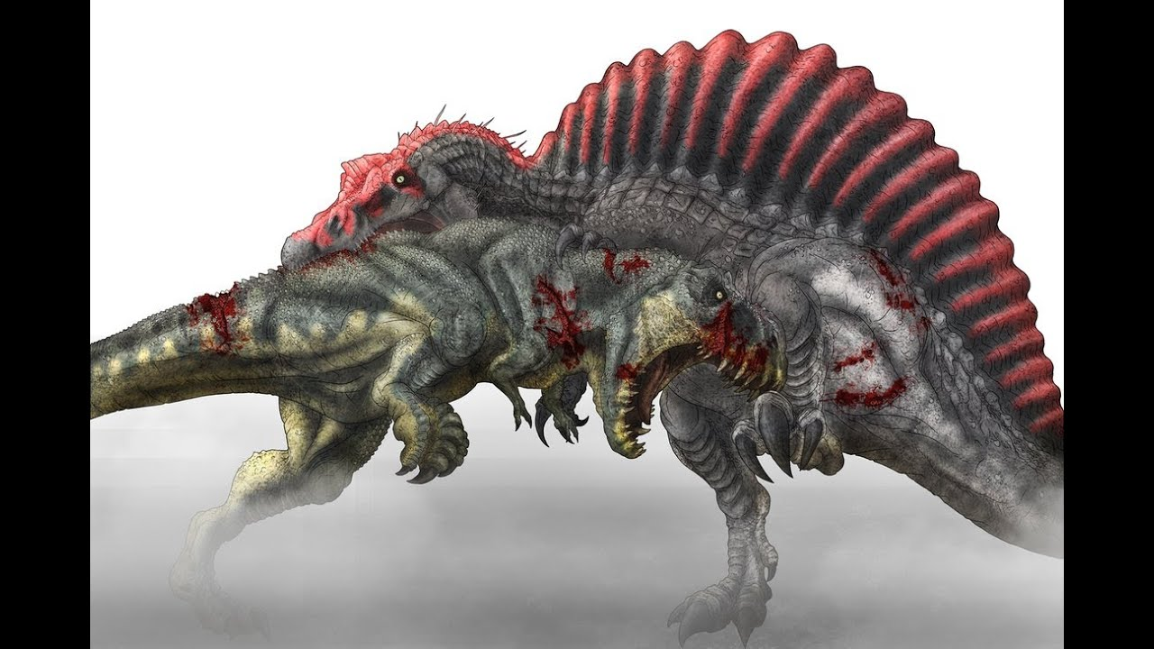 Who Would Really Win In a Fight? T.rex Vs Spinosaurus (NEW ... T Rex Vs Triceratops Fighting