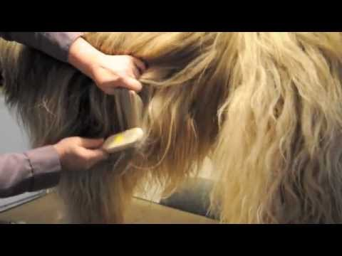 How to Brush a long coated dog. Part 1