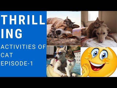 Thrilling activities of cat.episode-1