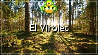 ZDD1 - 2010 Otkoga