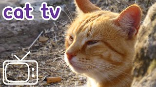 Cat TV: Best Video for Cats to Watch - 2 Hour Playlist
