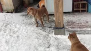 牡の時とは違って子犬も距離をとっている 急接近はヤバイと判っている ...